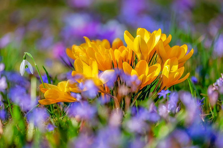 purple and yellow flowers in a field